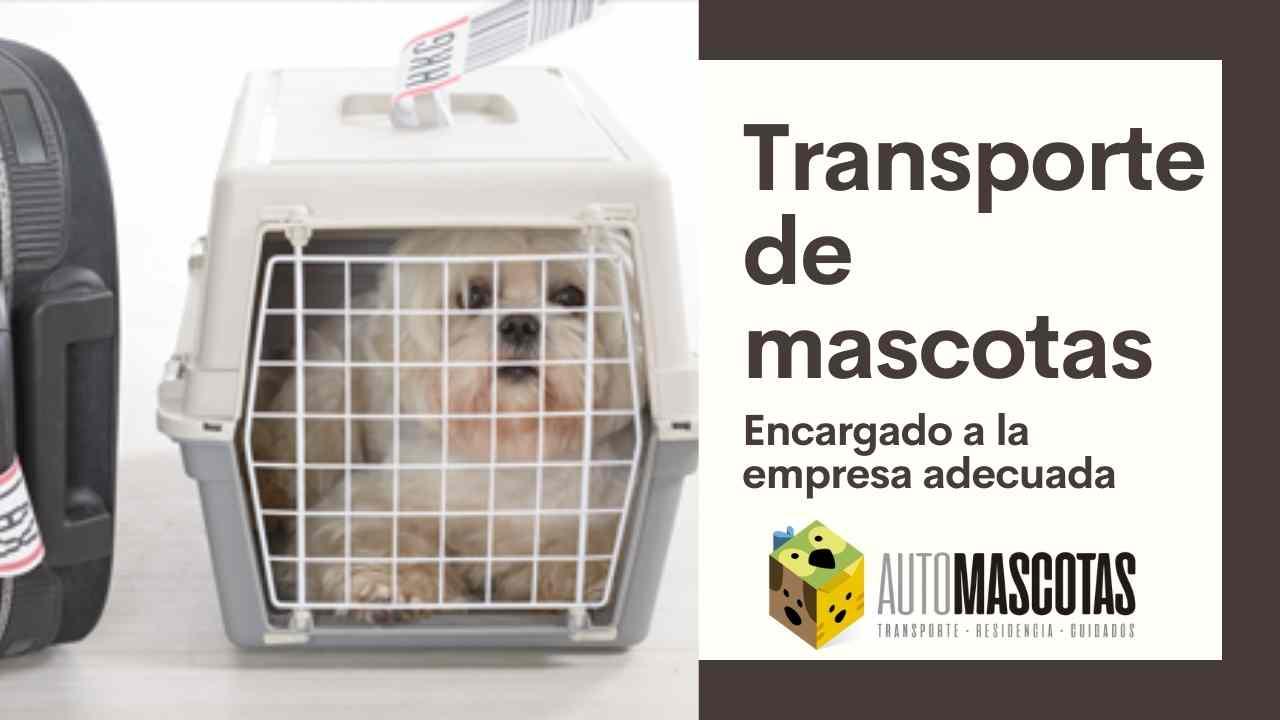 Transporte de mascotas encargado a la empresa adecuada