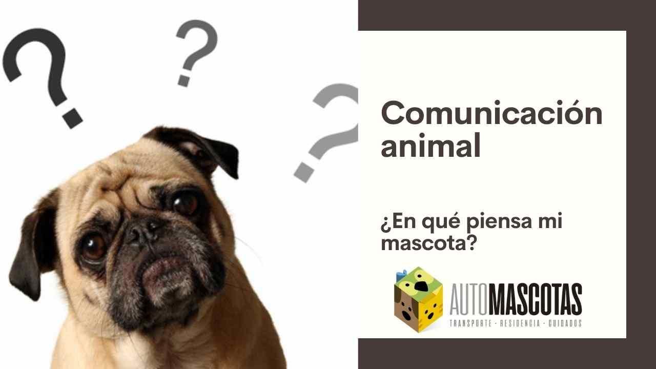 Comunicación animal, ¿en qué piensa mi mascota?