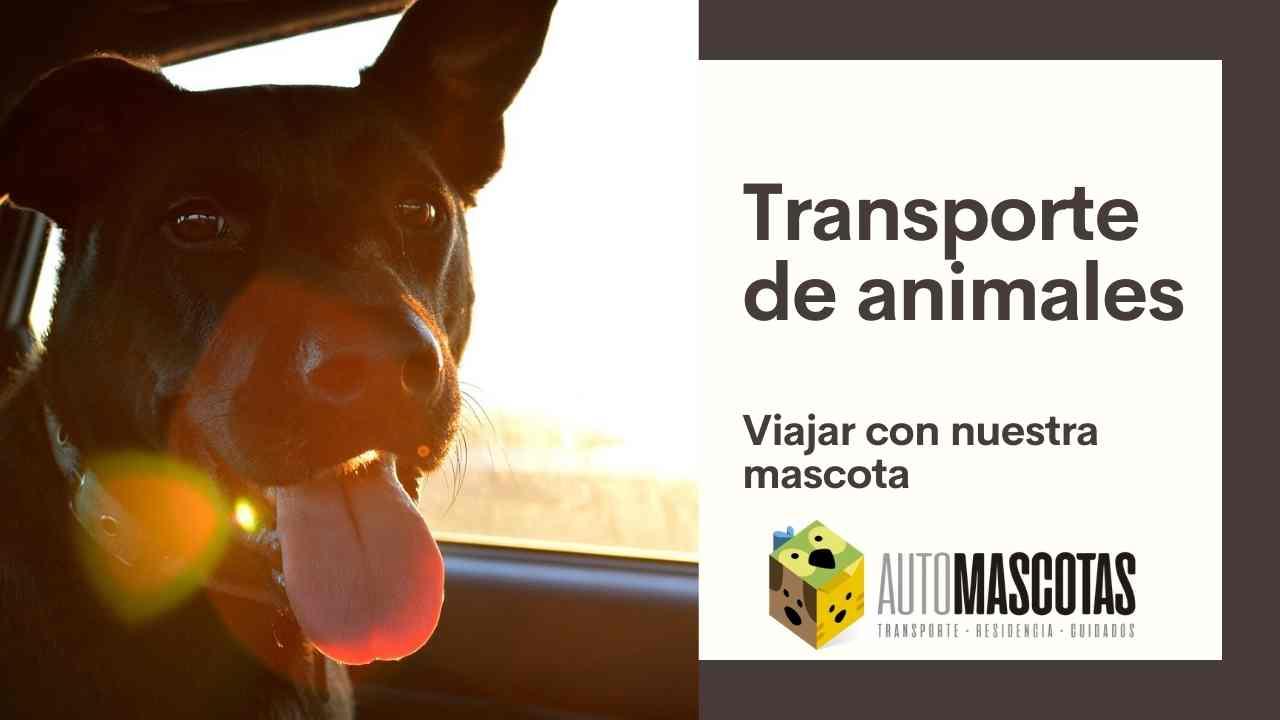Transporte de animales, viajar con nuestra mascota