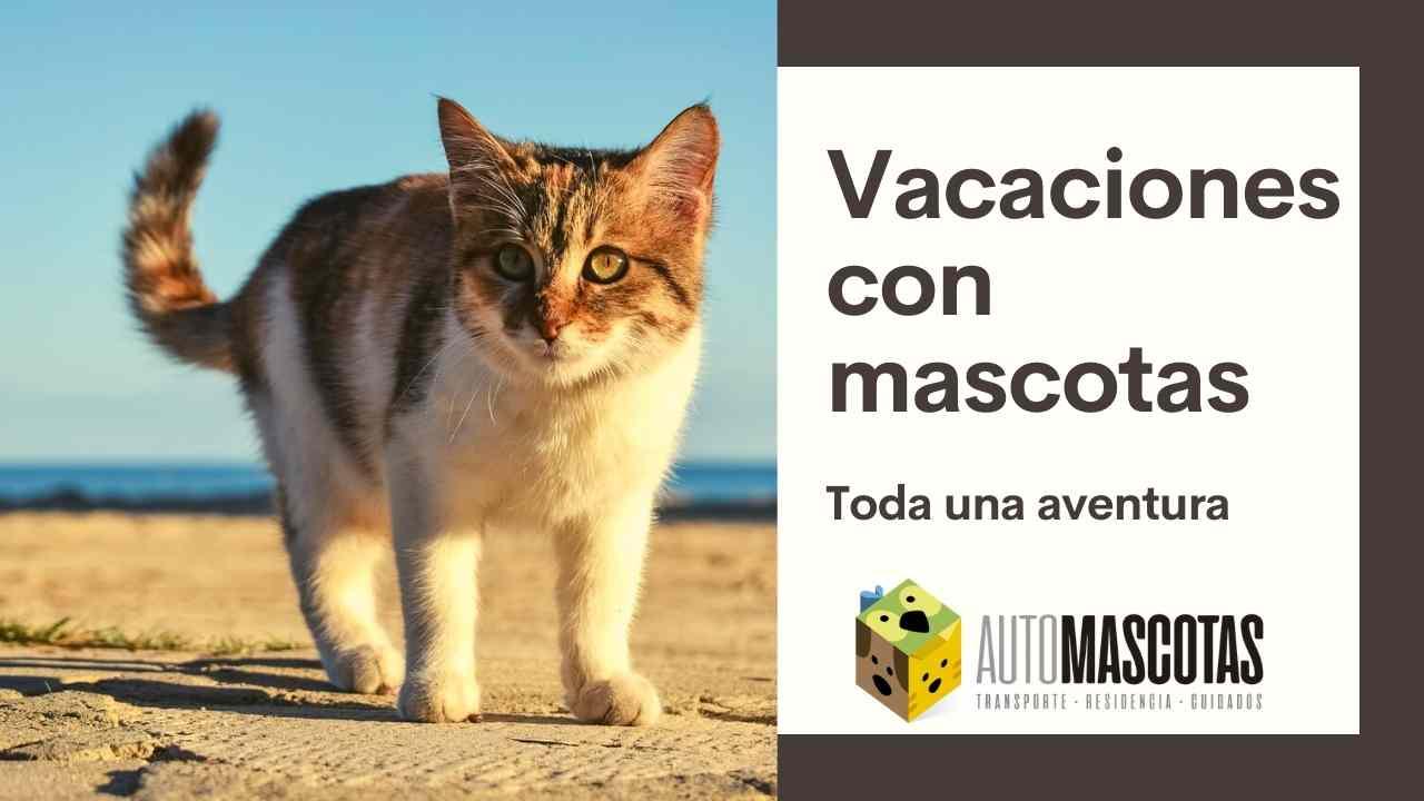 Vacaciones con mascotas, toda una aventura
