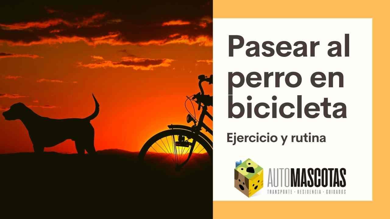 Pasear al perro en bicicleta, ejercicio y rutina