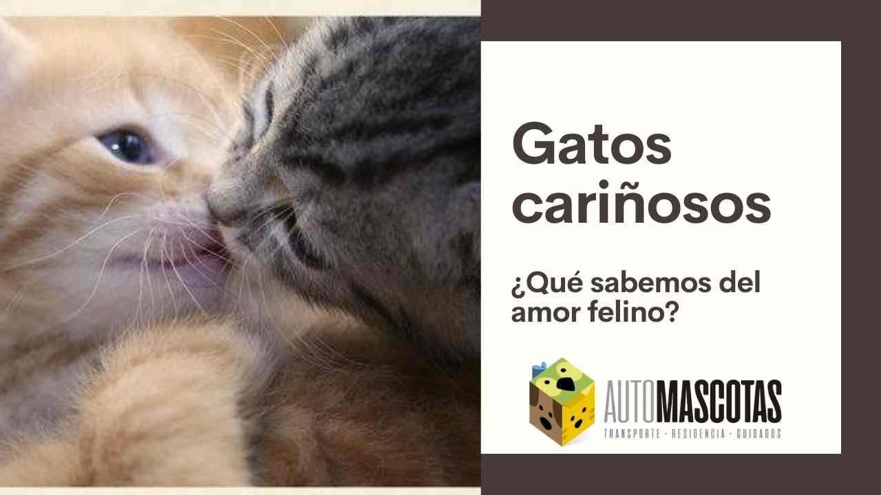 Gatos cariñosos, ¿qué sabemos del amor felino?