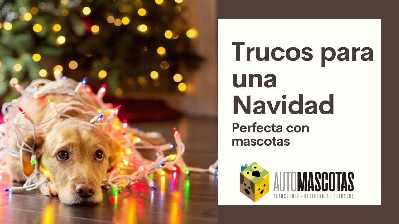 Trucos para pasar una Navidad perfecta con mascotas