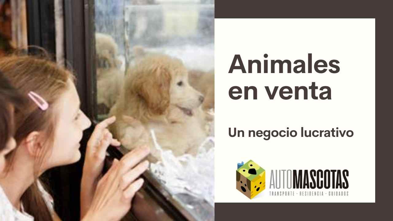 Animales en venta, un negocio lucrativo