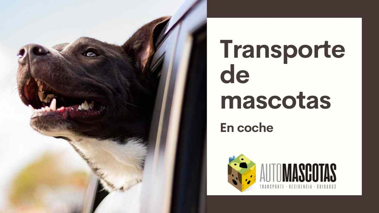 Transporte de Mascotas en coche.
