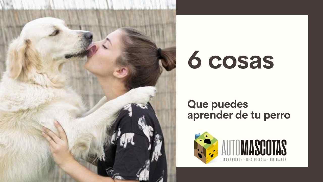 6 Cosas que puedes aprender de tu perro