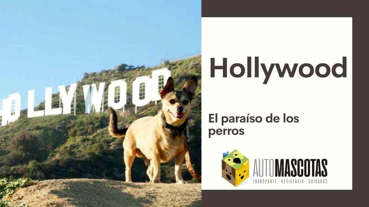 Hollywood, el paraíso de los perros
