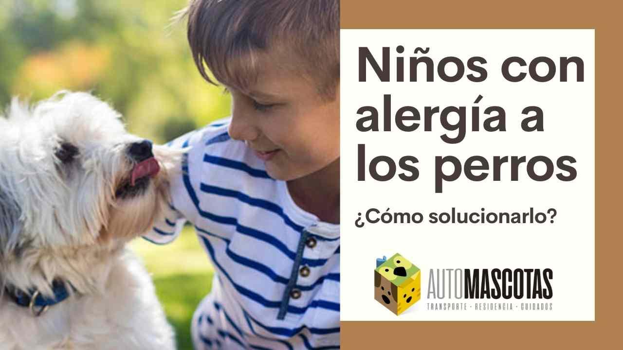 Niños con Alergia a los Perros
