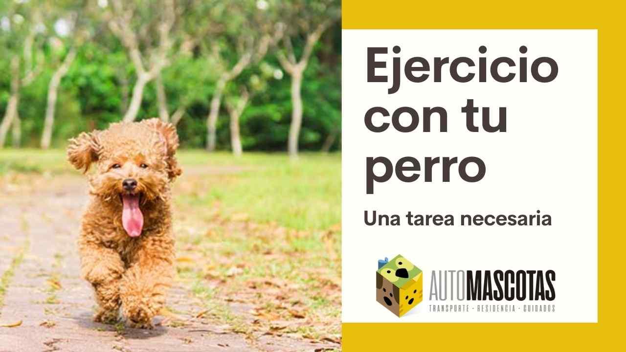 Ejercicio con tu perro. Una tarea necesaria