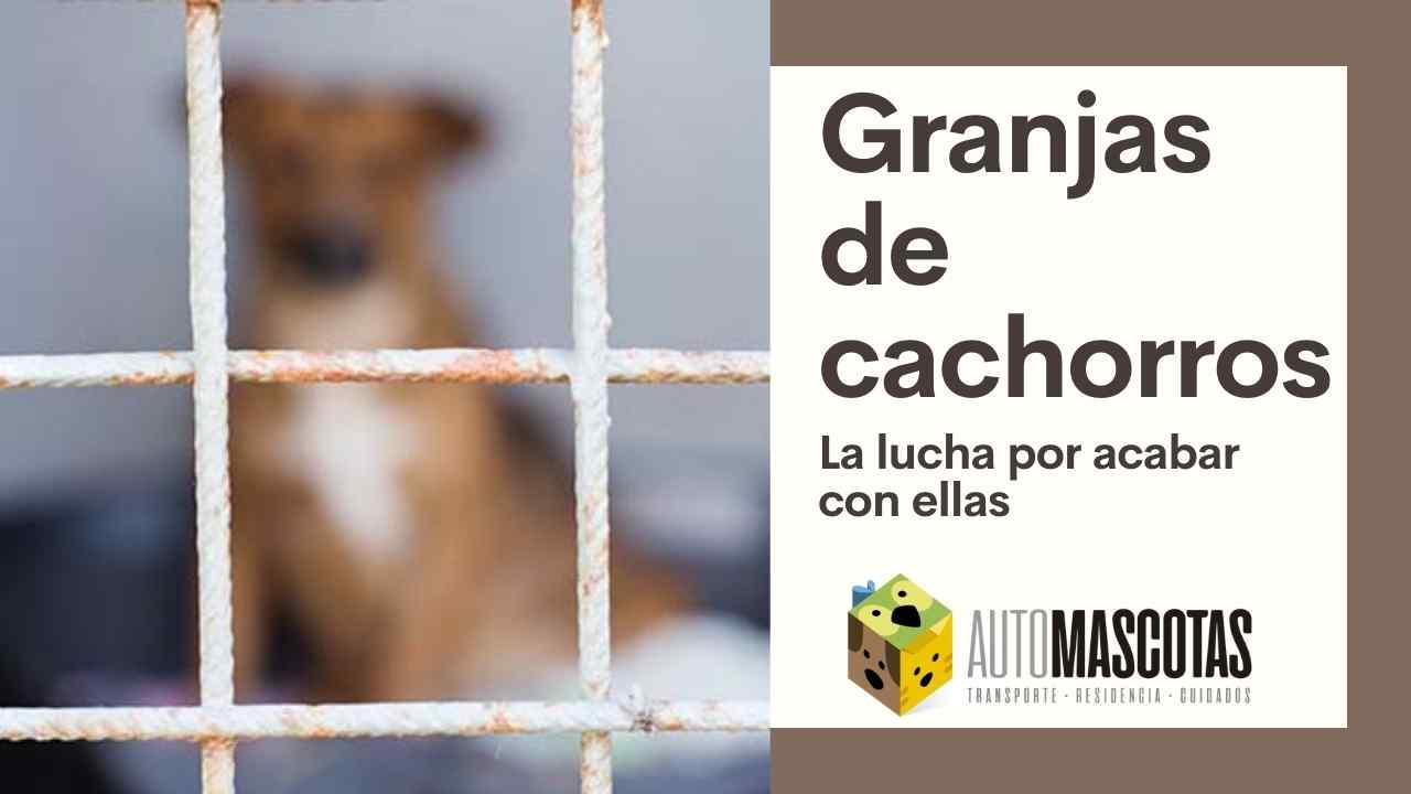 La lucha por acabar con las Granjas de Cachorros