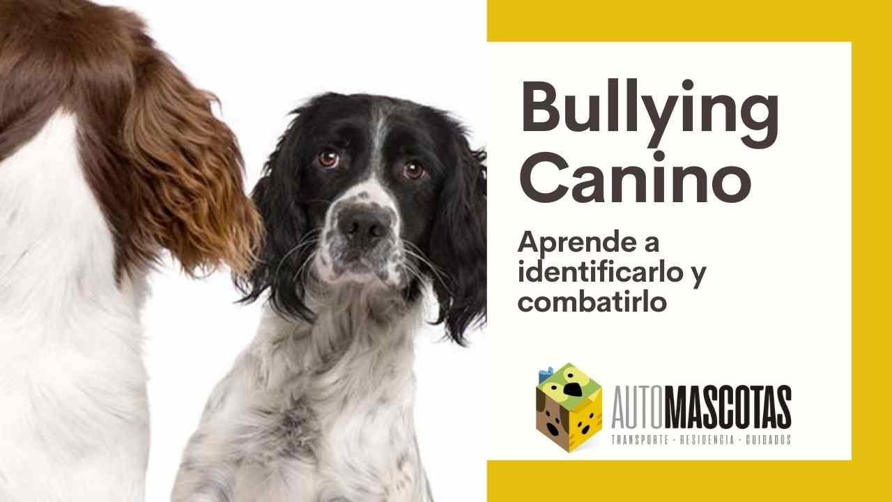 Identifica y combate el Bullying Canino