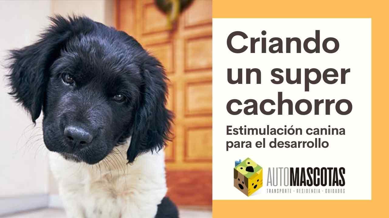 Criando un Super Cachorro: estimulación canina para el desarrollo del perro