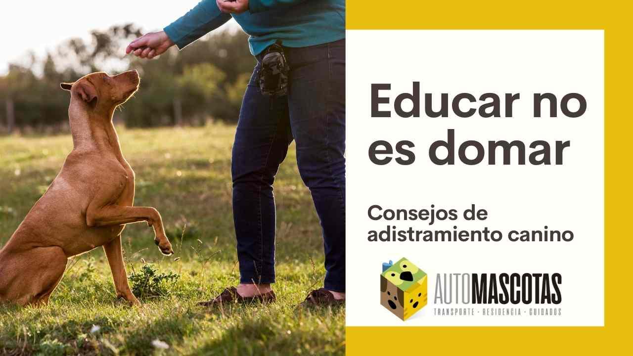 Educar no es Domar: Consejos de adiestramiento canino