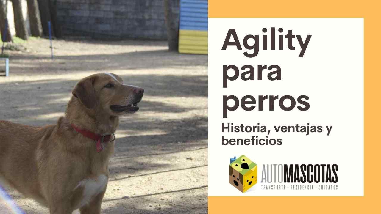 Agility para Perros: Ventajas, historia y beneficios