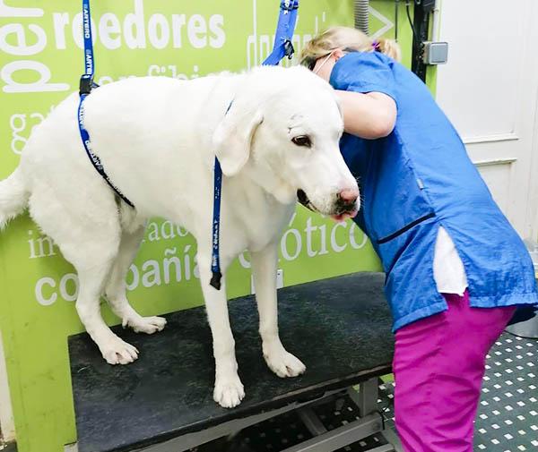 Peluquería canina